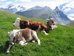 Švýcarská idyla