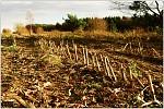Kukuřičný hřbitov