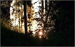 podvečerní světlo