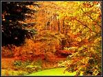 barvy podzimu jsou stále pěkné...