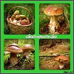 houbařské žně...
