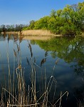 jaro u rybníka