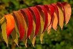 Listy podzimu