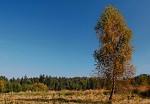 U nás na kraji lesa