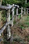 Kol v plote