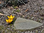 jaro mezi domy