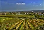 Hnanické vinice
