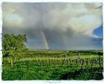 Bouřka v šatovské vinici Peklo