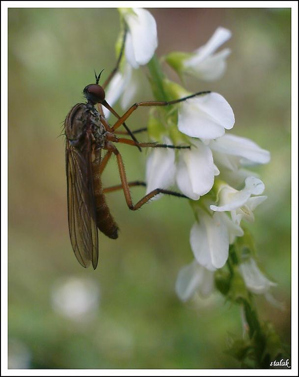 ...hmyzák...