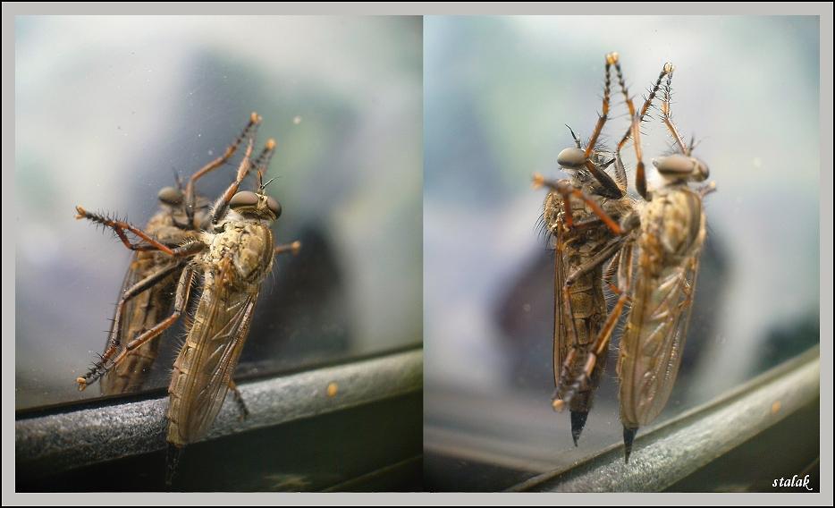 hmyzák,aneb kdo je kdo? :) test
