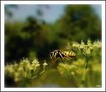 letem světem-vosím spěchem :)