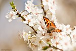 Jaro začíná