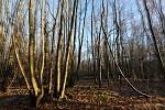 Woods ..