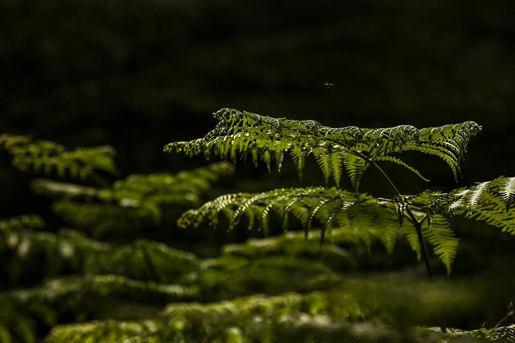 V zajetí zelené - vrstvy lesa