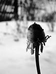 Zimní (o)kouzlení (meggy, 15)