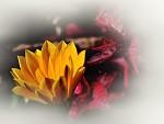 Květy babího léta