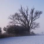 Mohykán v zimě