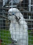 chytrý papoušek