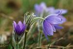 Jarní probouzení v říši květin