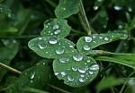 Po dešti 2