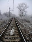 život je pes...někdy