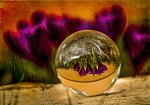 Glass Ball Photography 3