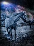 Koníkův sen