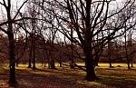Prosincová Stromovka