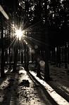 Lesní hvězda