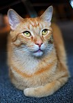 Kočko-modelka