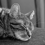 I kočky mají své sny