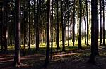 Pozdrav z lesa