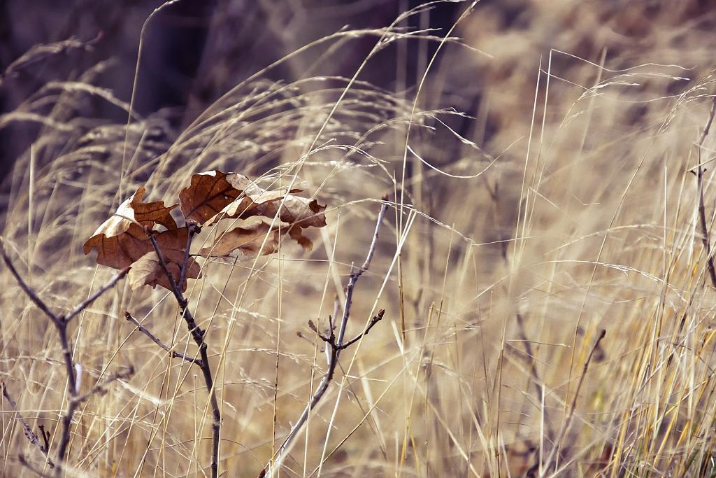 Zbytky podzimu