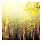 v lese I.
