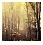 v lese II.