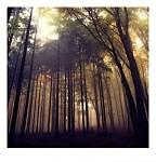 v lese III.