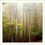 v lese IV.