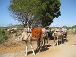 Karavana-Tunis