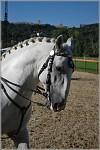 Krása kladrubských koní