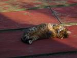 kočka jménem Bůček