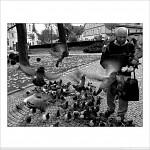 BIRDS STREET-PHOTO
