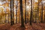 ...podzimní zastavení v lese...