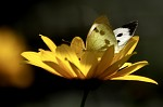 ...motýl.