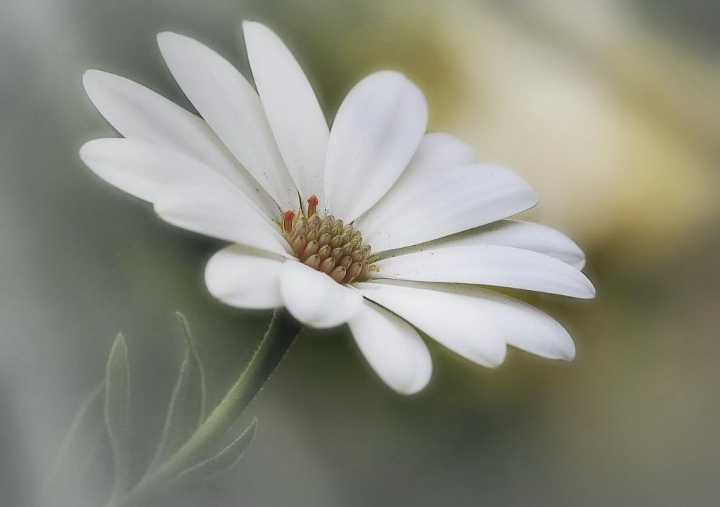 ,květ..