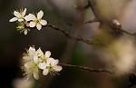 ,květy.