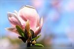 ,další květ.