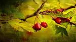 ,podzimní paleta.