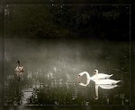 ,mlha na rybníce II.