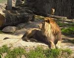 Lvi..