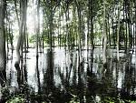 na Jižní Moravě,les po záplavách